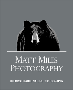 Matt Miles Photography